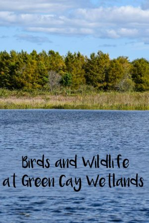 Birds and Wildlife at Green Cay Wetlands