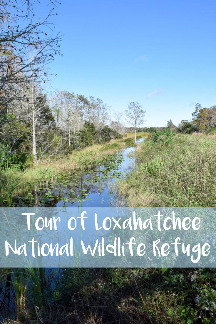 Tour of Loxahatchee National Wildlife Refuge