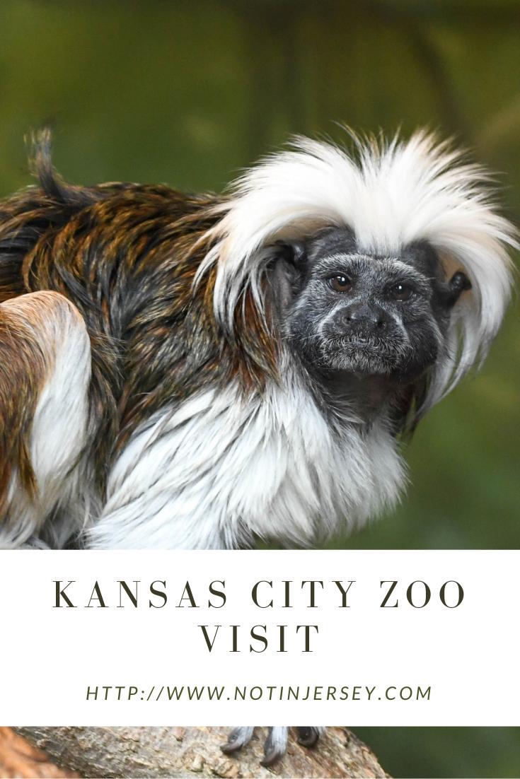 Kansas City Zoo Visit
